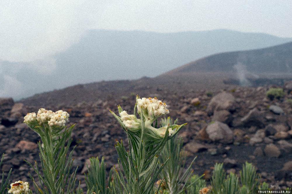 суматра цветы вулканы