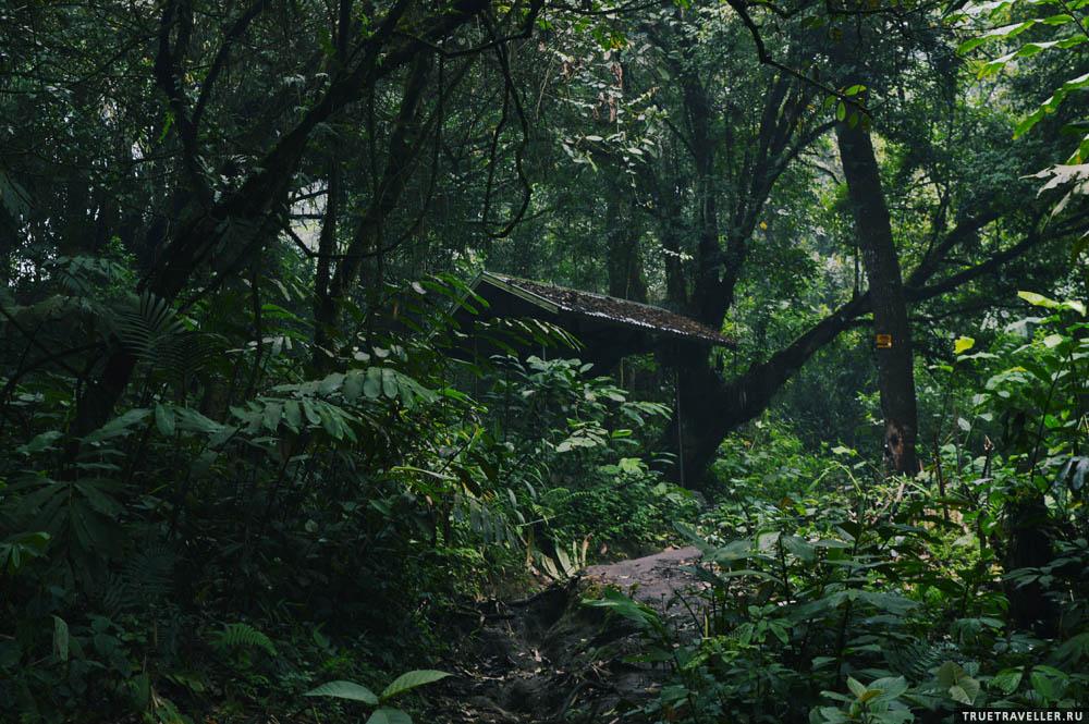 Сказочный дремучий лес.