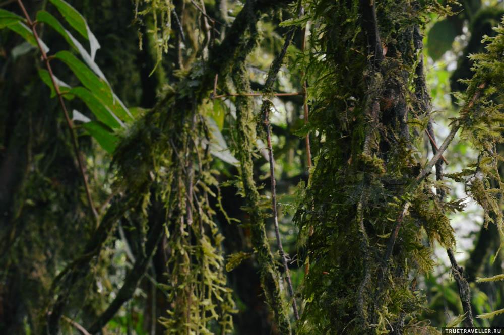 джунгли суматры