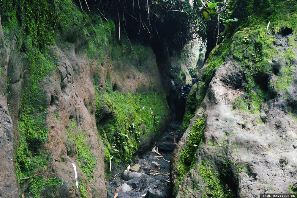 суматра джунгли