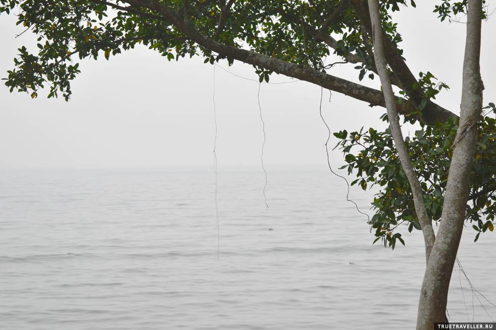 деревья суматры индонезии